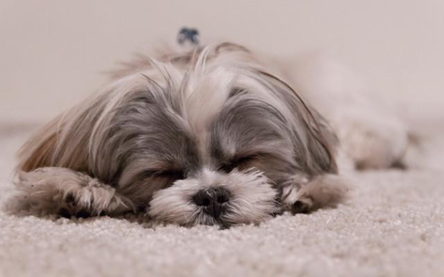 1. hund.jpg
